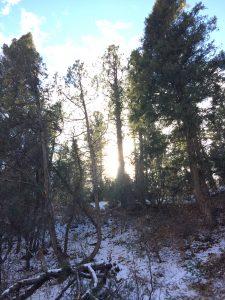 Taos nature self-care