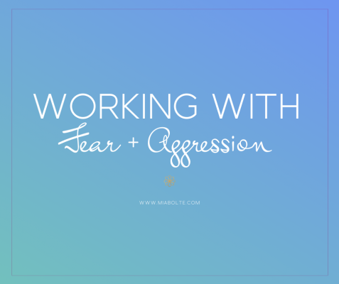 Working with Fear and Aggression-a short class